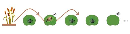 FrogHops